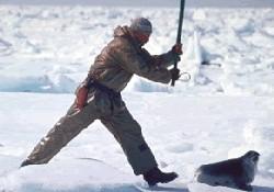 Kanada fok katillerini koruyor