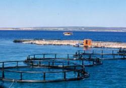 Balık çiflikleri AİHM şikayet edilecek