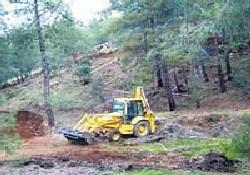 Kalkavan'ın şirketi ağaç katlediyor