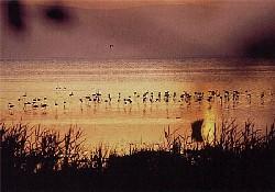 Acıgöl 'kuş cenneti' oluyor