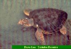 Mersin'de Deniz Kaplumbağaları