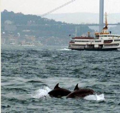 İspanyolların yeni gözdesi İstanbul