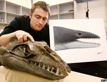 Yırtıcı balina fosili bulundu