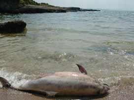 Güneyde esrarengiz balık ölümleri