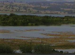 Samsun'daki Ladik Gölü'de kurudu