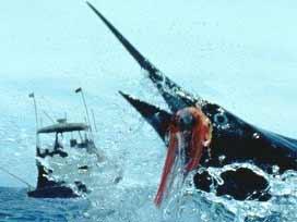 Hindistan'da 370 balıkçı kayboldu
