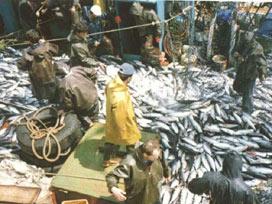 Balıkçının ağı doldu yüzü güldü