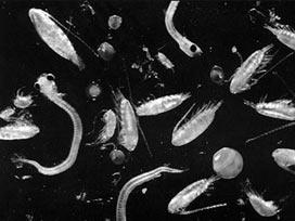 Deniz canlıları enerji küpü çıktı