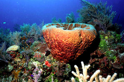 Deniz diplerinin gerçek sahipleri