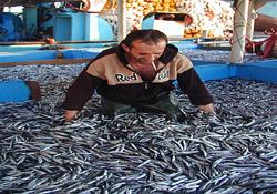 Karadenizli balıkçı mağdur oldu
