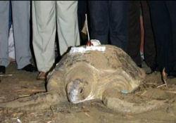 Kaplumbağalara İsim Bulunamadı