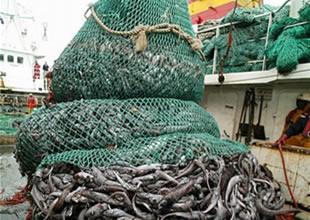 İzmirli balıkçıların kaçaklarla başı belada