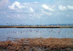 Gala Gölü milli park ilan edildi
