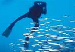 Kaçan Balık Büyük Oldu