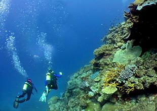 Okyanusun dibinde antibiyotik arayışı