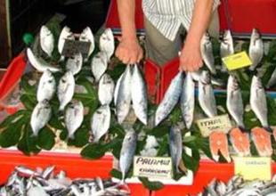 Palamut bollaşınca balık fiyatları ucuzladı