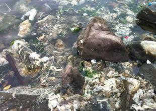 Denize atılan çöpler balıkları öldürüyor