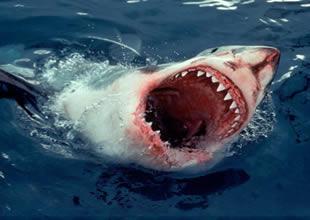 Dünyada ilk dişli köpekbalığı değilmiş!