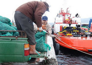Kaçak avlanan 12 ton midye yakalandı