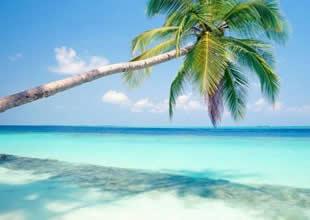 Tropik cennetler erken öldürüyor (muş)