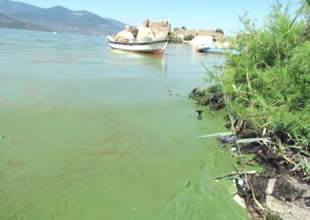 Yağışlarla temizlenen Bafa Gölü'nde balık bereketi