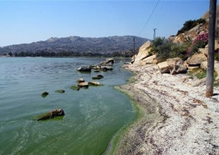 Bafa gölü kirlilikten nasıl kurtulacak?