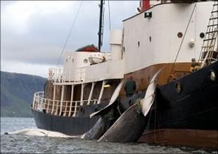 Japonya'da balina etine ilgi azaldı