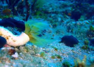 Marmaris Körfezi tehlike sinyalleri veriyor