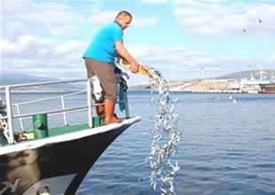 Avrupa'da denize balık dökmek yasaklandı