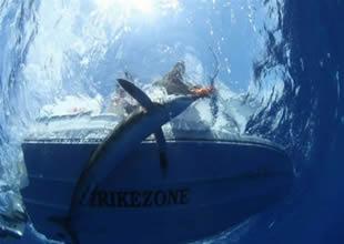 Balık avlarken tekneye köpekbalığı atladı