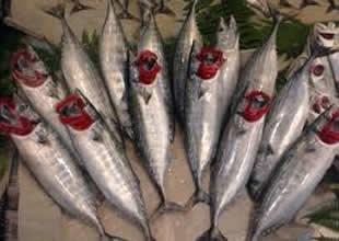 Palamut bollaştı, kafes balıklarına ilgi azaldı