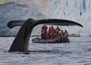Turistlerin Antartika'da şok olduğu an!