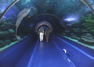 Dünyanın en büyük 5. akvaryumu açılıyor