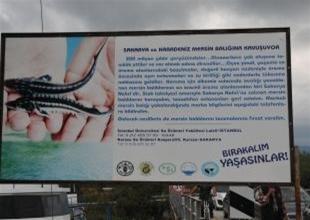 """""""Bırakın Mersin Balığını Yaşatalım"""" afişi"""