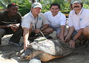 'Deniz kaplumbağası çiftlikleri kapansın'