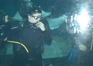 Deniz Akkaya köpekbalıklarıyla birlikte yüzdü