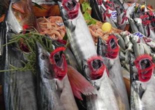 """Ucuz balık vatandaşa, """"Lakerda"""" yaptırdı"""