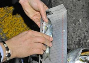 Yüzlerce kasa lüfer balığına el koyuldu