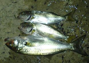 """Çanakkale'de """"Küçük Balık"""" denetimi"""