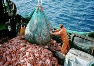 Okyanusta ekosistemi balıkçılar bozuyor!