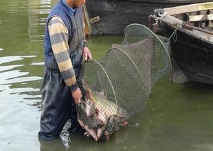 Manyas Gölü'nde balık bereketi yaşanıyor