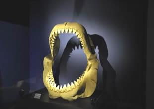 Köpekbalığı Dünyası Sergisi açıldı