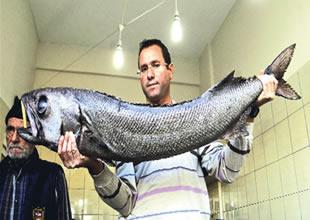 Beyşehir Gölü'nün 'Yağ Balığı' araştırılıyor