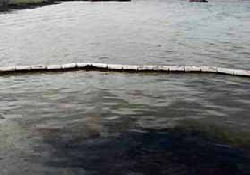 Hint Okyanusunda Petrol Kirliliği