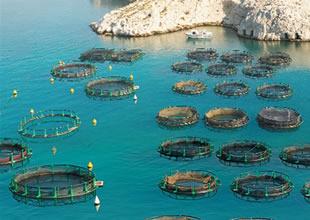 Balık çiftlikleri yerine öncelik turizm olmalı