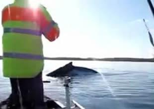 Avustralya'da balina ile korkutan temas!