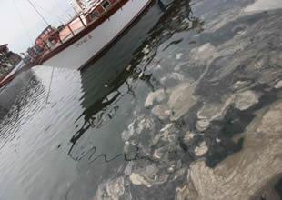 Marmara Denizi'nde kabus geri döndü
