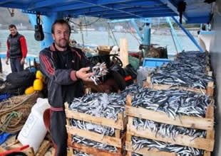 Karadeniz'de hamsi kıtlığının sebebi nedir?
