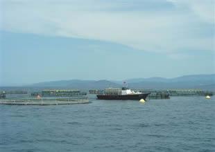 Balık çiftlikleri açık denize taşındı