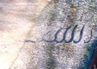Balığın üzerindeki Allah yazısı şaşırttı